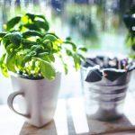 Plantele si medicina stiintifica